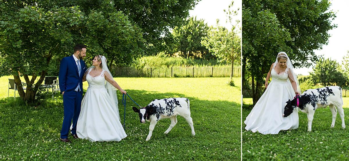 Brautpaarshooting mit Kälbchen in Crailsheim